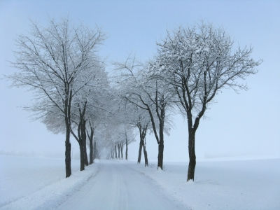 Allee im Winter