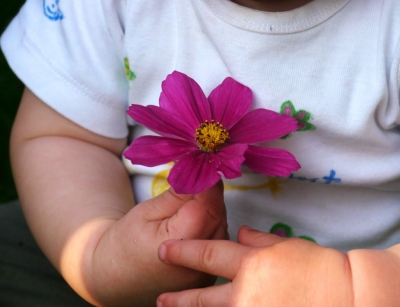 Blume in Kinderhand