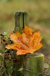 Herbstgedichte Meine Gedichte Zur Herbstzeit