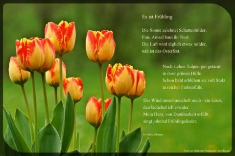 Frühlingsgedichte Meine Gedichte Zur Frühlingszeit