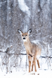Gedicht reh schnee